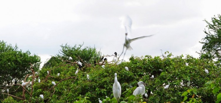 Bang Lang Stork Sanctuary
