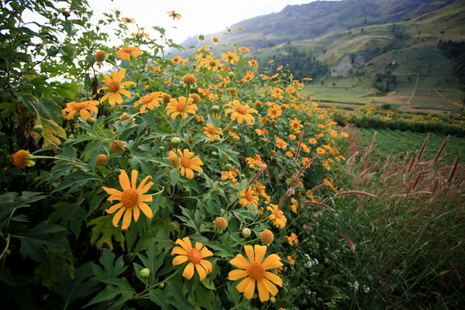 Da Quy flowers