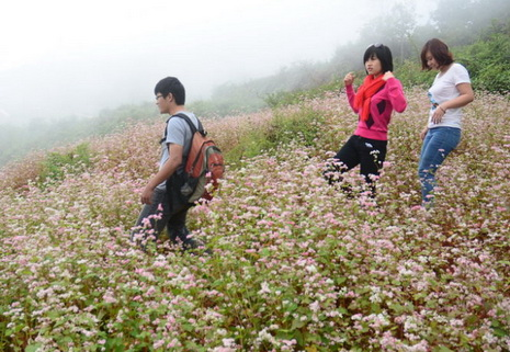 flowers in Ha Giang