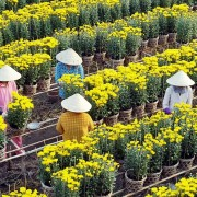 Mekong Delta city aspires to thrive as tourist hub, flower exporter