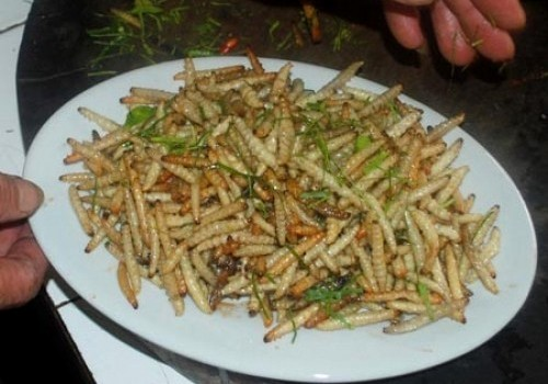 Larva saigon