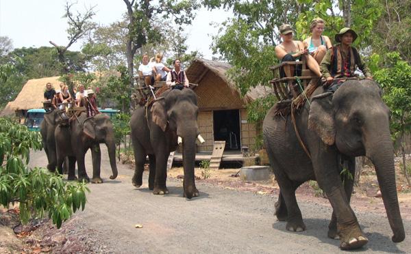 buon ma thuot elephan 1