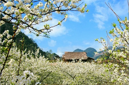 Flower Paradise Moc Chau 13