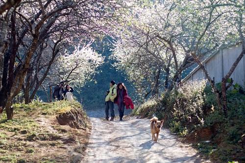 Flower Paradise Moc Chau 14