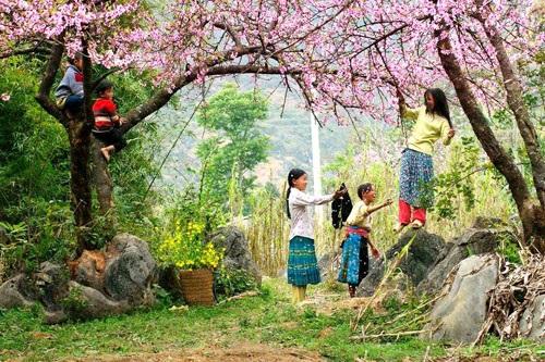 Flower Paradise Moc Chau 16