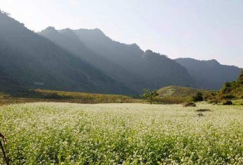 Flower Paradise Moc Chau 4