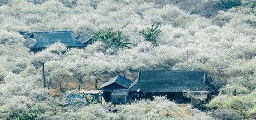 Flower Paradise Moc Chau 8