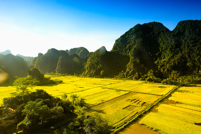 Rice Field In Vietnam 1