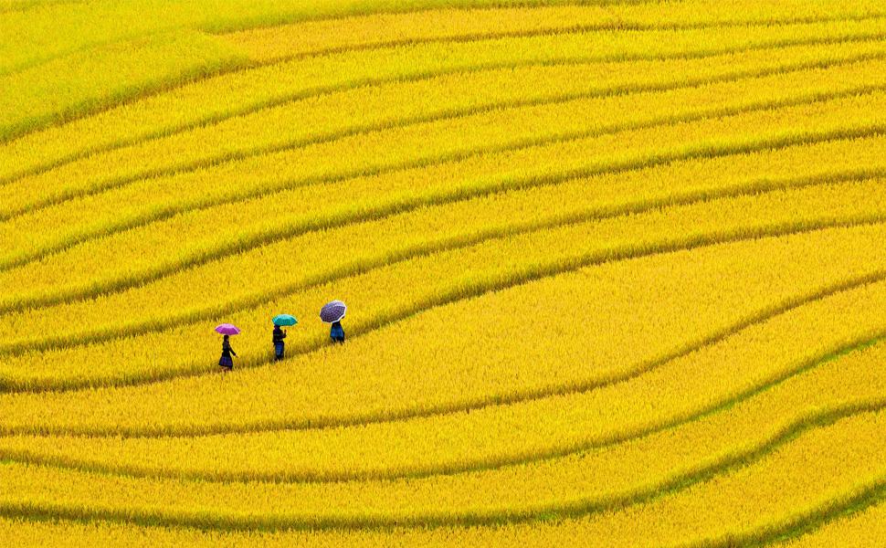 rice mill vietnam