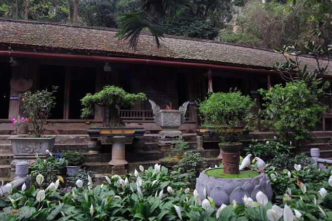 Thay Pagoda 7