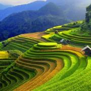 Vietnam terraced rice fields, one of the most beautiful scenes in the world
